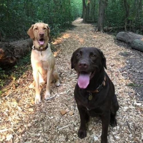 Rusty and Stella on the New Trails